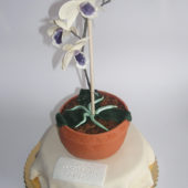 tort storczyk